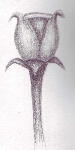 flower_b_12052006-509