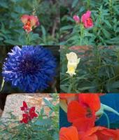 garden27092005-63